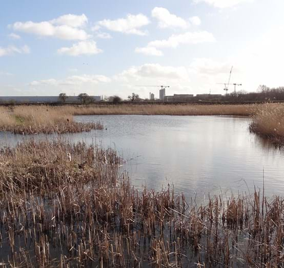 Crossness_Nature_Reserve.jpg