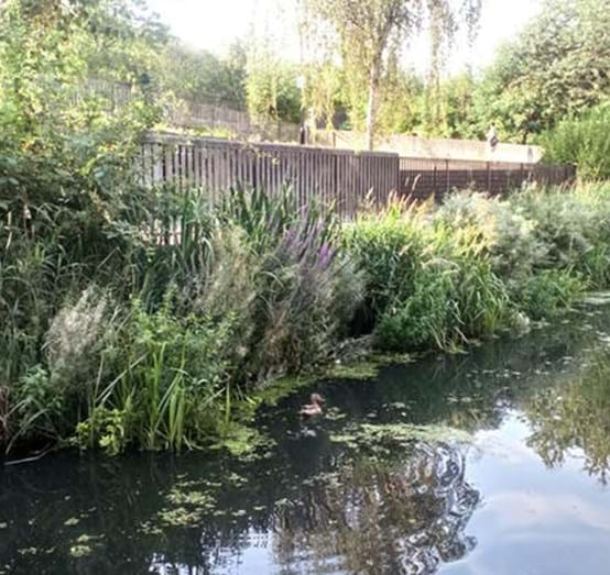 Greening the Thamesmead canals.JPG